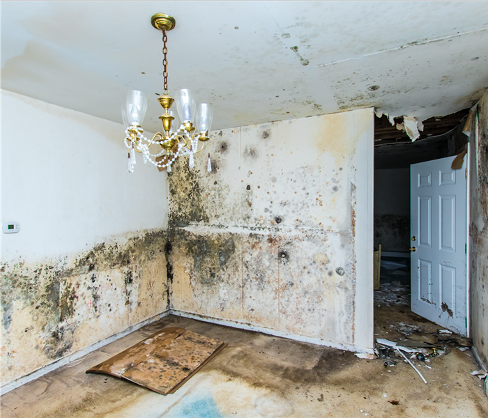 An empty room with a chandelier, walls are white but are all covered with mold