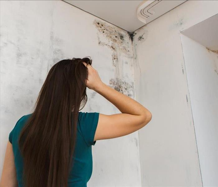 Mold Remediation Will Mold Disappear If I Do Nothing?