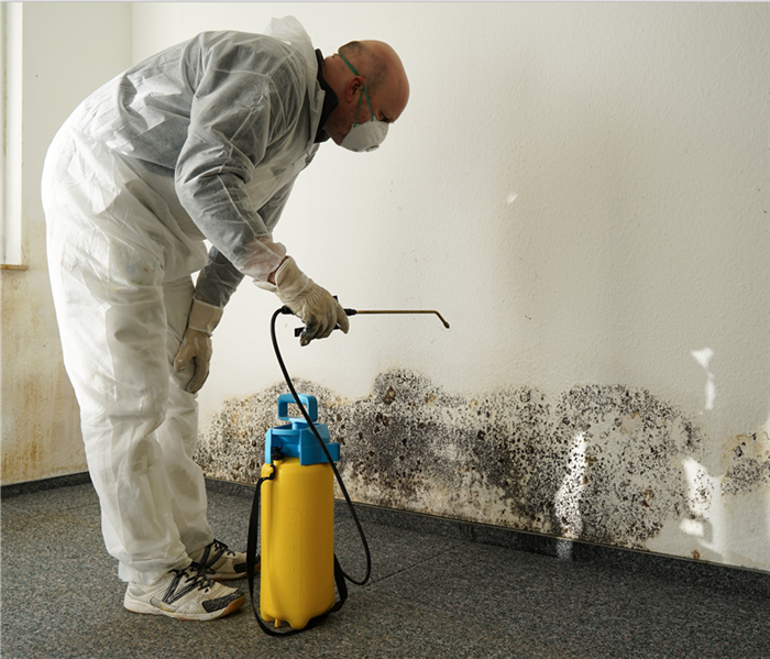 Mold Remediation Understanding the Costs of Mold Removal